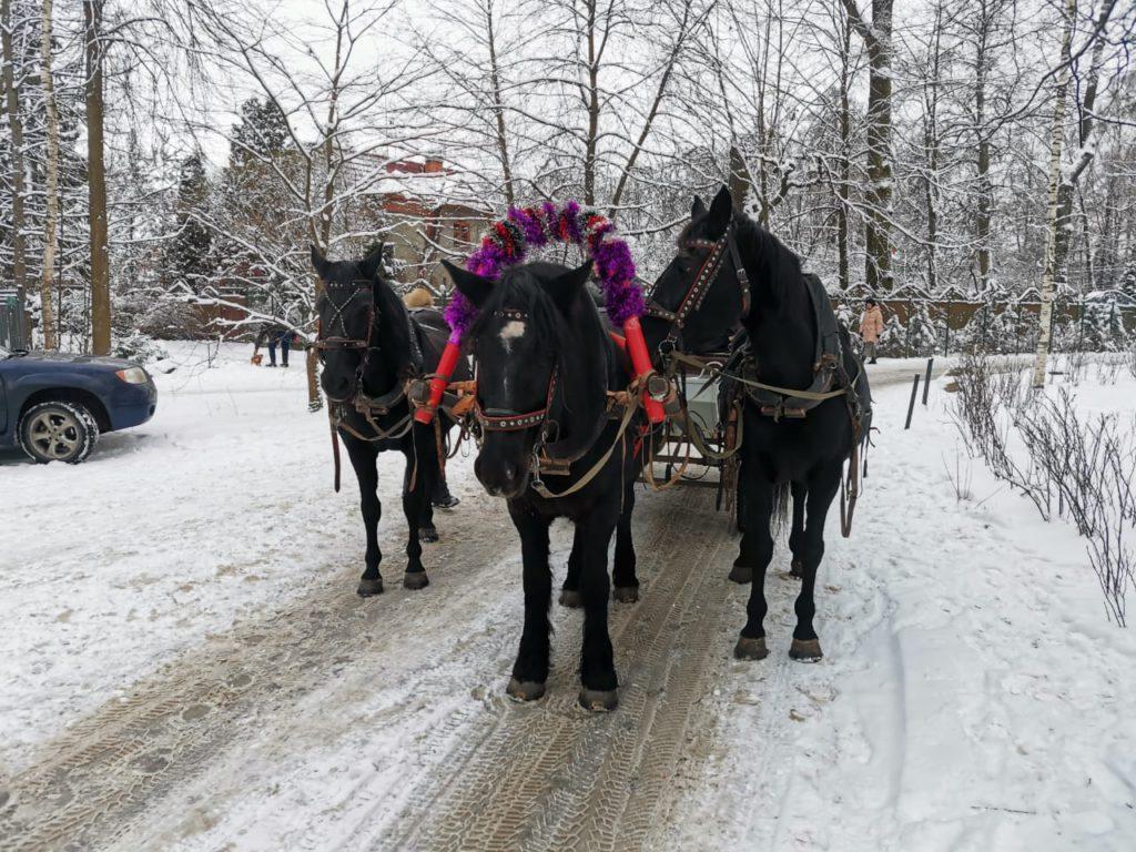 Filmar caballos y una troika en Rusia