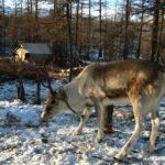 Filmar naturaleza en Rusia